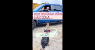 #2 Chú chó hướng dẫn bác tài đỗ xe |Tiktok video triệu view #shorts